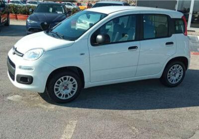 FIAT Panda van 1.2 Easy 69cv 4p.ti E6d-temp Bianco Gelato Km 0